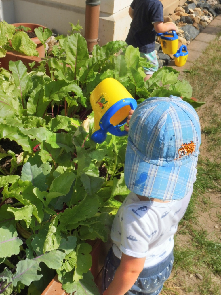 Verantwortung für das Gemüse im Hochbeet